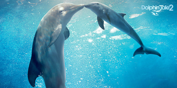 MOVIE REVIEW: Dolphin Tale 2